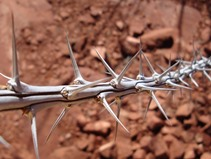 20160202-desert-thorns-img-lge